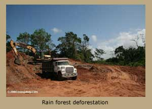 Rain forest deforestation.